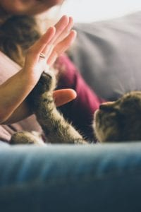 High 5 with a cat